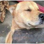狗狗为何心甘情愿被主人打?