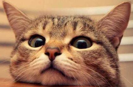 收养流浪猫之后如何跟猫咪快速建立感情呢?