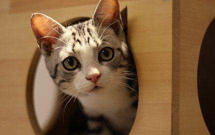 说说猫咪森林吸引你的地方