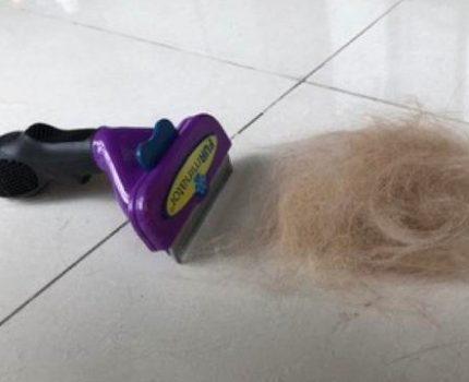 猫奴得此梳毛神器,不再为主子掉毛困扰!