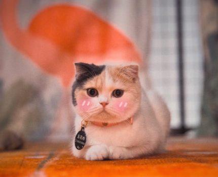 猫奴必入!深圳最温馨的猫咖,没有之一!