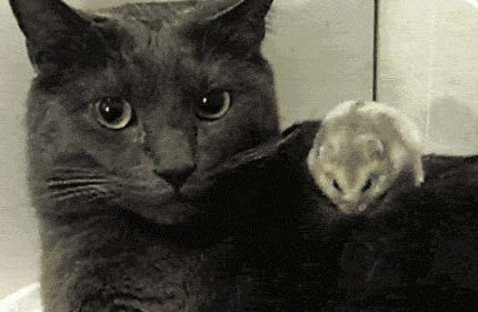 猫咪:铲屎官赶快护驾!有老鼠!吓死本喵了
