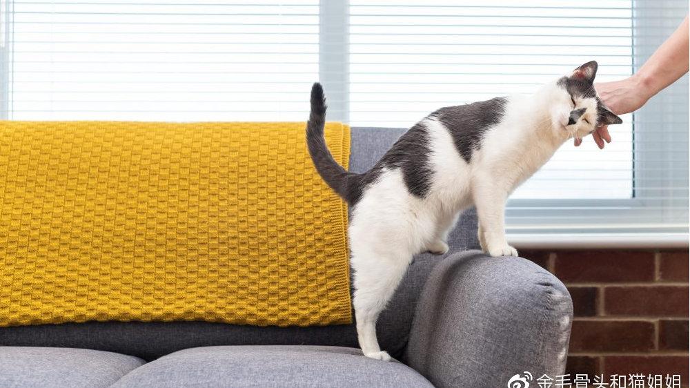 猫咪做错了事,我应该怎么做?