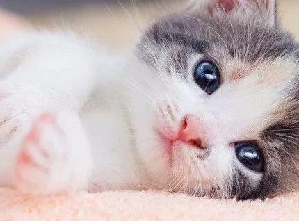 捡猫后,我蹲在猫砂盆一整晚……