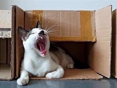 猫窝都是摆设,唯有它是真爱