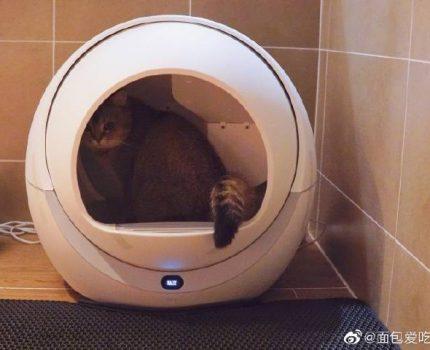 😻😻铲屎官必备‼️PETREE自动猫厕所💯💯