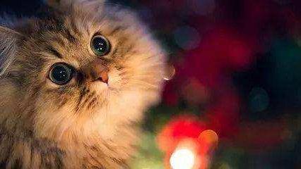 猫咪泪痕严重怎么办?
