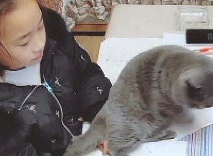 为什么有的人天生就会被猫咪亲近呢?