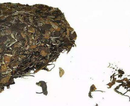 白茶遇水,让你体味到生命的原味