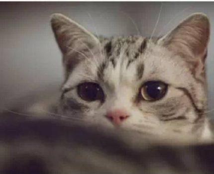 猫夜里走过来闻闻我,是想确认我死了没吗?