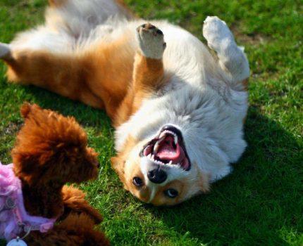 狗狗迷惑行为大赏