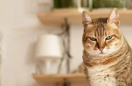 吸猫的正确姿势是什么?