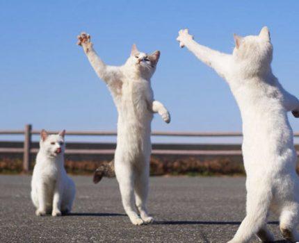 舞武双全,德智体美全面发展的猫猫们