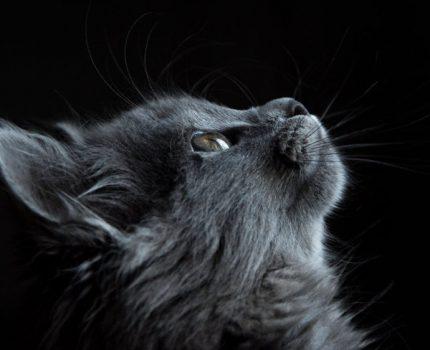 如何拍出好看的宠物照?4个构图技巧要知道