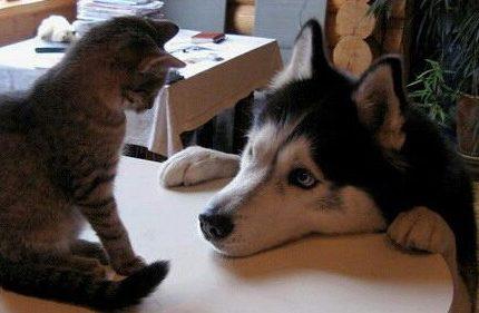 猫咪的心思你别猜?有些表现可以猜