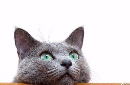 【宠物猫砂种草】3年铲屎官的猫砂经验之谈