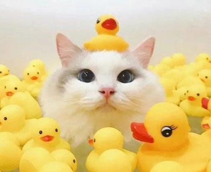 靠颜值混社会的猫,洗澡时也要保持优雅哦!