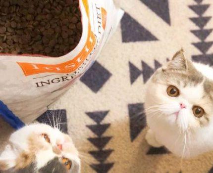 猫粮应该储存在什么地方?