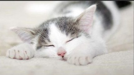 猫咪为啥喜欢和人睡觉?