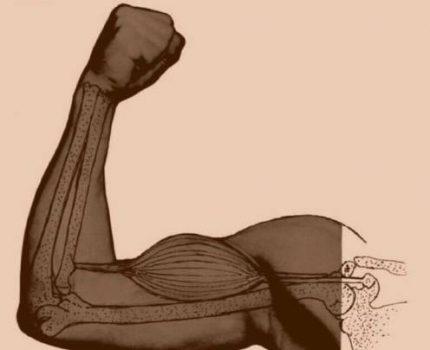 你了解肌肉吗?