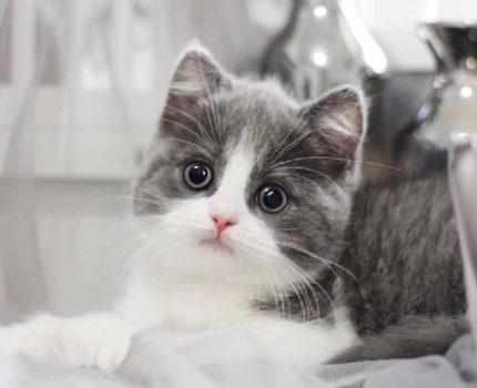 小猫不拉粑粑怎么办?