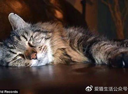 在猫界,有哪些世界之最?