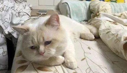 猫猫颓废大赛,颓出了成年人的沮与丧…
