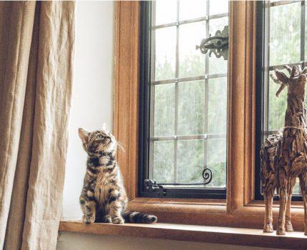 第九夜—小奶猫速成记