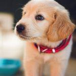 钙——你的狗狗补对了吗?
