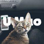 老司机,慢慢开!你的猫都晕车啦!