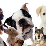 狗狗品种介绍大全,快来找找有认识的吗?