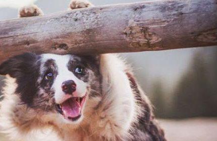 别惹狗狗生气!一定要懂的狗狗生气5个征兆