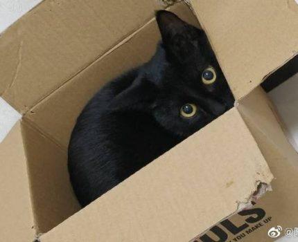 我愿你来生来世都只是我的猫