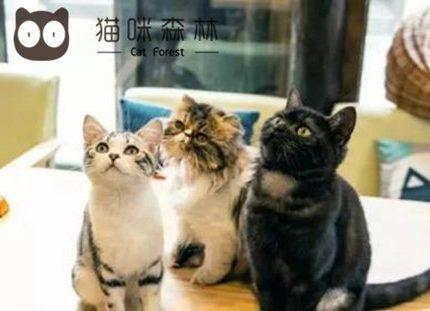 在猫咪森林思考一个做到撸猫统一的问题