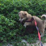 最忠诚十大狗狗排名:第一名不得不服!