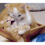 猫咪太小不会喂养?最全教程都在这里了!