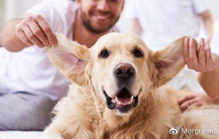 狗狗的耳朵要怎么清理呢?洗耳液必不可少