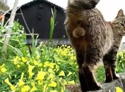 猫是啥做的?