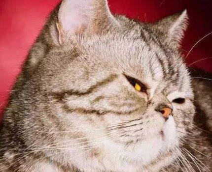 被猫主子鄙视是怎样的一种体验?