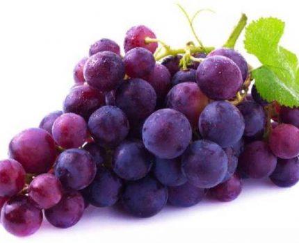 葡萄里到底有哪些东西?