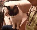猫咪和老爷爷,好有爱的一对