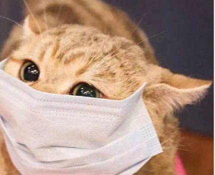 猫咪突然随地大小便,这些细节你注意了吗?