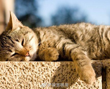 新手养猫的常见问题(下)