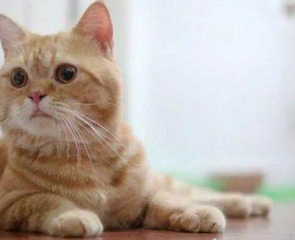 """看猫""""毛相"""",也可以判断猫的性格"""