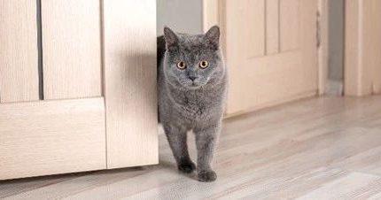 如果我死了,猫会吃掉我的尸体吗?