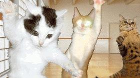 猫半夜跑酷怎么办?