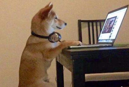 狗狗喜欢看电视,这是为什么呢?