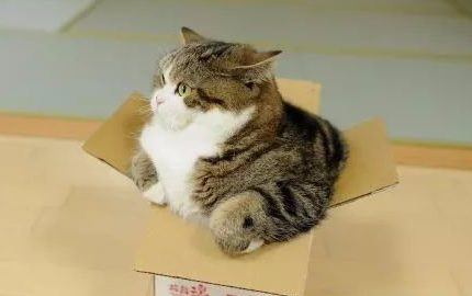 对猫来说,铲屎官的爱就是一把猪饲料!