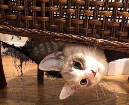 猫咪为什么对钻箱子情有独钟!