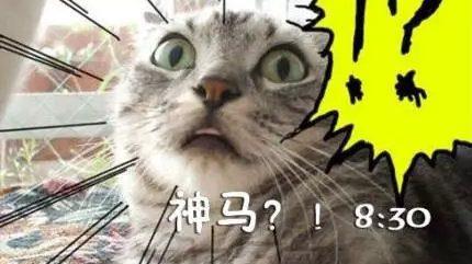 猫咪有起床气吗?